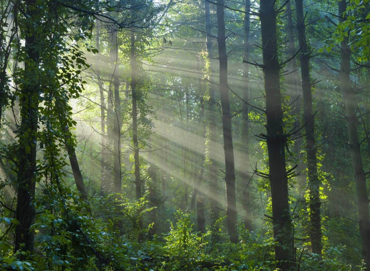 forest_scene_with_sunrays_2-1200x880.jpg